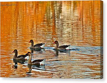 Canvas Print featuring the photograph Ducks In The Fall by Lynn Hopwood