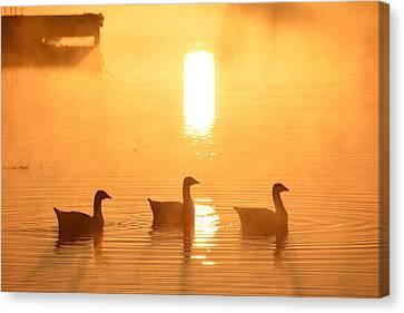 Ducks On A Foggy Lake At Sunrise Canvas Print