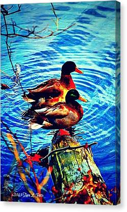 Canvas Print featuring the photograph Ducks On A Log by Tara Potts
