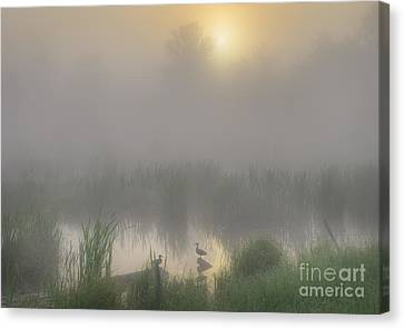 Ducks On A Pond Canvas Print by Dan Jurak
