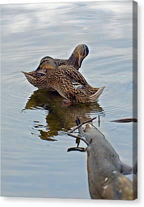 Ducks On  Log Canvas Print by Susan Leggett