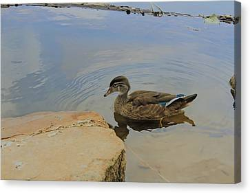 Ducky One Canvas Print