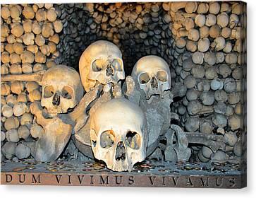Dum Vivimus Vivamus. Canvas Print by Andy Za