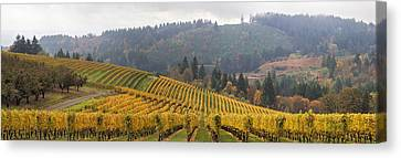 Dundee Oregon Vineyards Scenic Panorama Canvas Print by Jit Lim