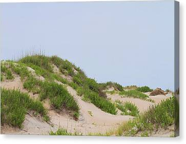 Dunes And Grasses 4 Canvas Print by Cathy Lindsey