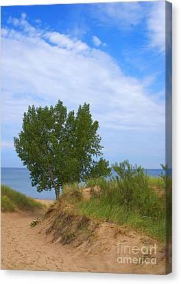 Dune - Indiana Lakeshore Canvas Print