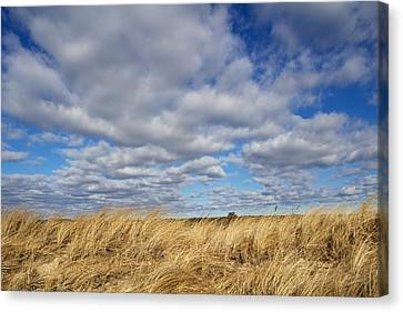 Dune Grass And Sky Canvas Print by Allan Morrison