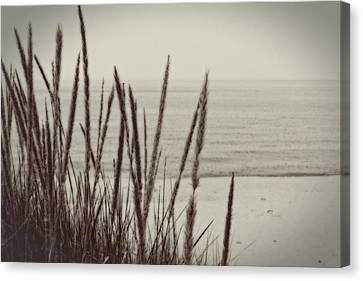 Dune Grass In Early Spring Canvas Print by Michelle Calkins
