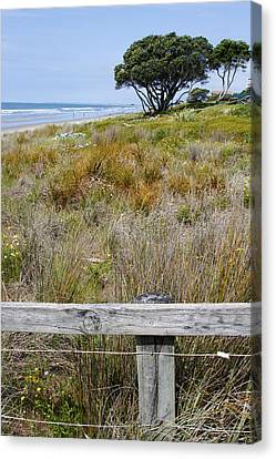 Dune Grass Canvas Print by Les Cunliffe