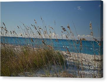 Canvas Print featuring the photograph Dune Grasses by Judy Wolinsky