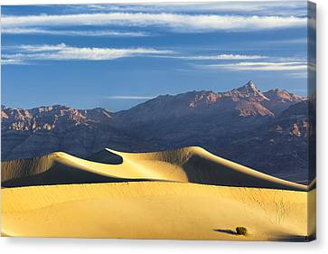 Canvas Print featuring the photograph Dune Light by Patrick Downey