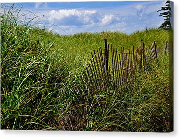 Dunes On Prince Edward Island Canvas Print