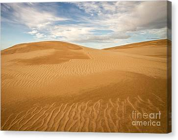 Dunescape Canvas Print by Alice Cahill
