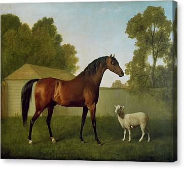 Dungannon, The Property Of Colonel Okelly, Painted In A Paddock With A Sheep, 1793 Canvas Print by George Stubbs