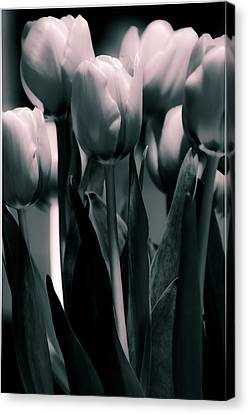 Canvas Print featuring the photograph Duo-toned Tulip by Craig Perry-Ollila