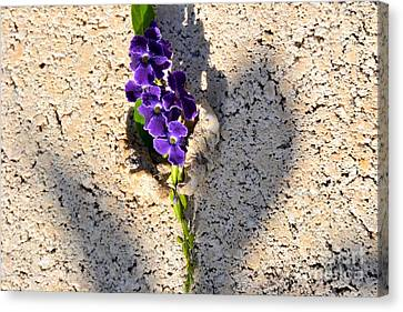 Canvas Print featuring the photograph Duranta- Shadow Play 1 by Darla Wood