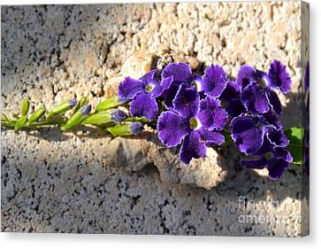 Canvas Print featuring the photograph Duranta- Shadow Play 2 by Darla Wood