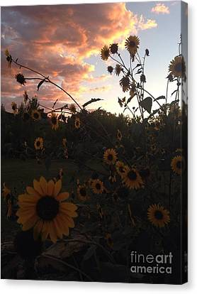 Canvas Print featuring the photograph Dusk In Taos by Polly Anna