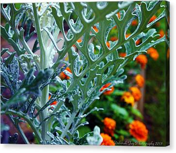 Dusty Miller And Dew Drops Canvas Print by Deborah Fay
