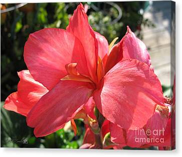 Canvas Print featuring the photograph Dwarf Canna Lily Named Shining Pink by J McCombie