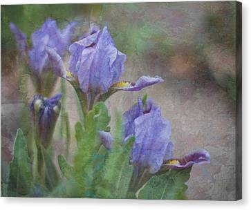 Canvas Print featuring the photograph Dwarf Iris With Texture by Patti Deters