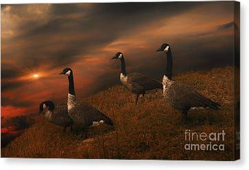 Dwellers On The Threshold Canvas Print by Tom York Images