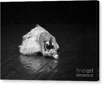 Young St. Clare Canvas Print - Dying Swan 4. by Clare Bambers