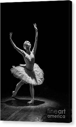 Dying Swan 6. Canvas Print