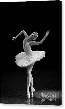 Young St. Clare Canvas Print - Dying Swan 7. by Clare Bambers