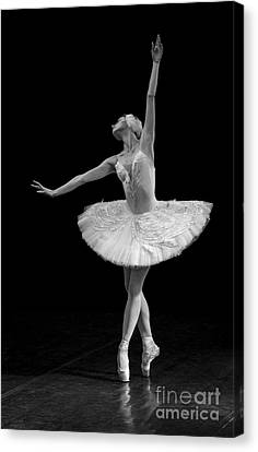 Young St. Clare Canvas Print - Dying Swan 9. by Clare Bambers