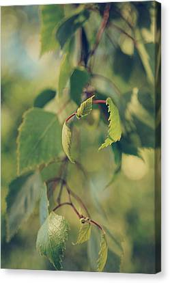 Each Sight Canvas Print by Laurie Search