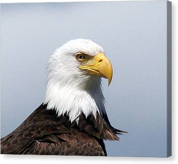 Eagle 1 Canvas Print by John Bushnell