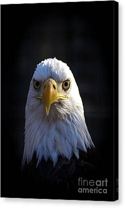 Eagle 2 Canvas Print