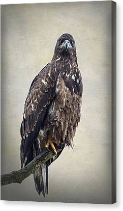 Eagle Canvas Print by Angie Vogel