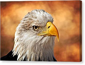 Eagle At Sunset Canvas Print by Marty Koch