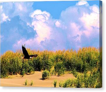 Eagle At The Beach Canvas Print