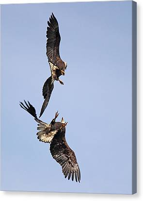 Eagle Ballet Canvas Print by Randy Hall