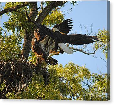 Eagle Bringing Fish Into The Nest Canvas Print