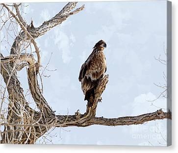 Eagle Eye Canvas Print by Lori Tordsen
