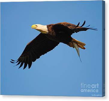 Eagle In Flight With Fish II Canvas Print