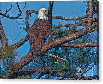 Eagle In Oil Canvas Print by Deborah Benoit