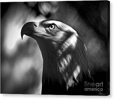 Eagle In Shadows Canvas Print by Robert Frederick