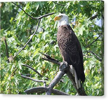 Eagle Lookout.  Canvas Print by Bruce  Morrell