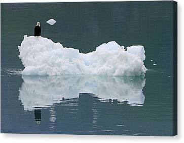 Eagle On Ice Canvas Print by Shoal Hollingsworth