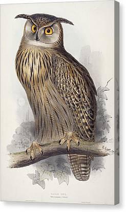 Eagle Owl.  Bubo Maximus Canvas Print by Edward Lear