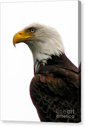 Eagle Portrait Canvas Print