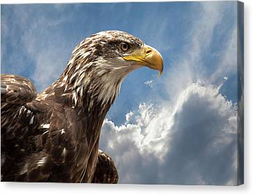 Eagle Portrait Canvas Print by Sheila Haddad