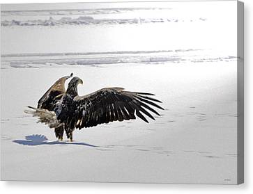 Eagle Prayer Canvas Print by RJ Martens
