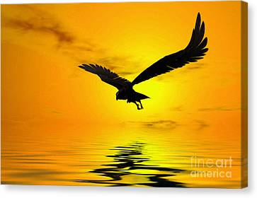 Feeding Canvas Print - Eagle Sunset by John Edwards