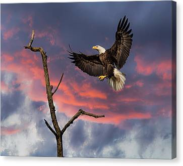 Eagle Sunset Landing Canvas Print